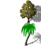 beech_palmcoco.png