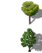 birch_oak.png